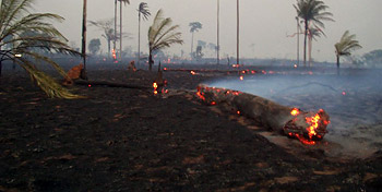 Photograph of smoke and smouldering logs in Acre, Brazil