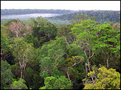 Photograph of Amazon Rainforest Canopy