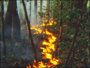 Photograph of Ground Cover Fire