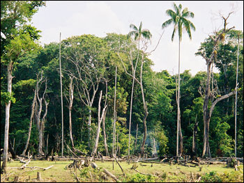 Photograph of Exposed Rainforest