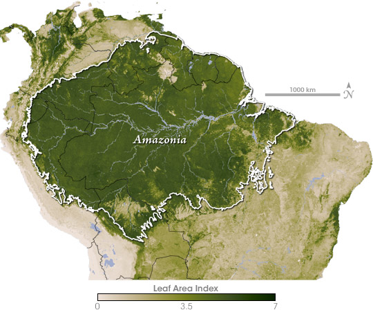 Satellite map of Leaf Area Index in the Amazon