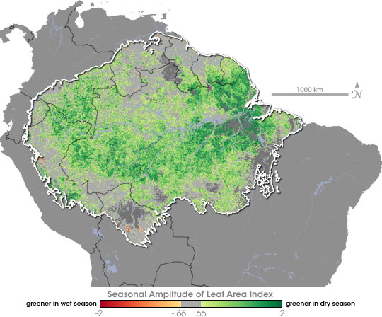 Map of seasonal amplitude of leaf area index in the Amazon.