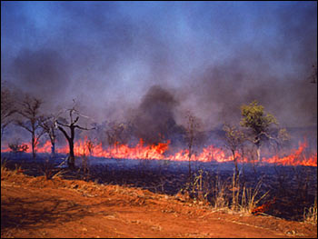 ground-level view of burning savanna