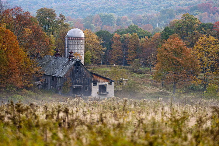 Photograph of an abandoned farm with regrowing forest in the Catskills region, New York State.