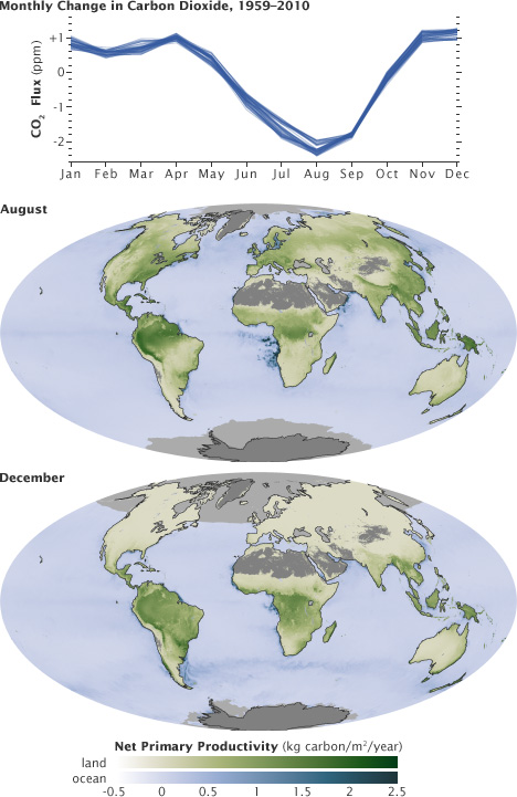 Maps of global net primary productivity in the land and ocean.