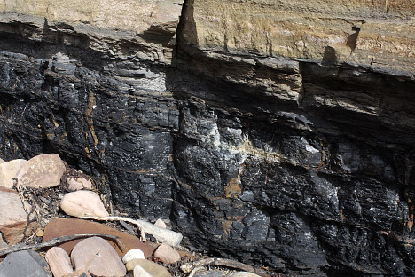 Photograph of a coal seam near Fife, Scotland.