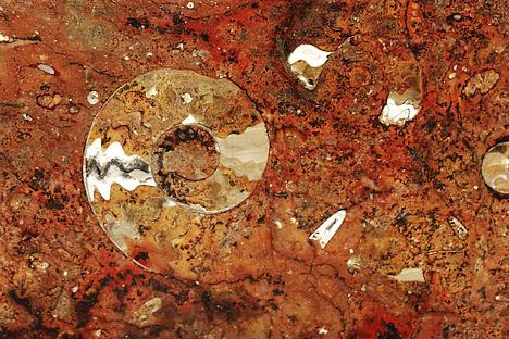 Fossil ammonite embedded in marble (metamorphosed limestone).