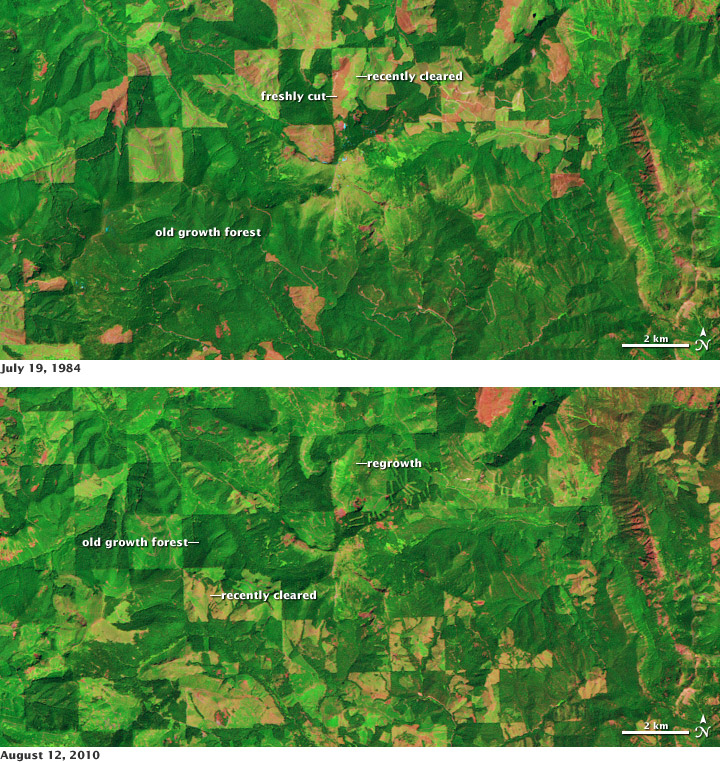 Satellite images of deforestation and regrowth in the Cascades, Washington State.