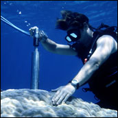 Photograph of Diver Drilling Dead Underwater Coral