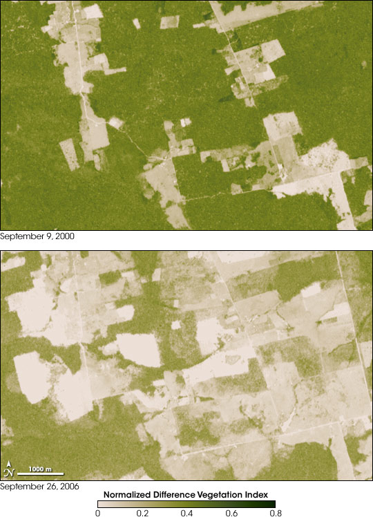 Satellite comparison of vegetation in 2000 and 2006 showing deforestation in Brazil.