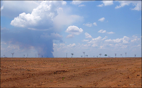 Photograph of industrial deforestation in Brazil