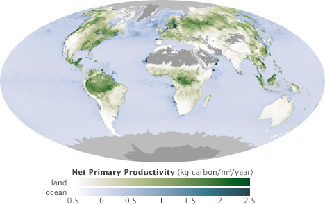 Map of global net primary productivity for the first week in July, 2003.