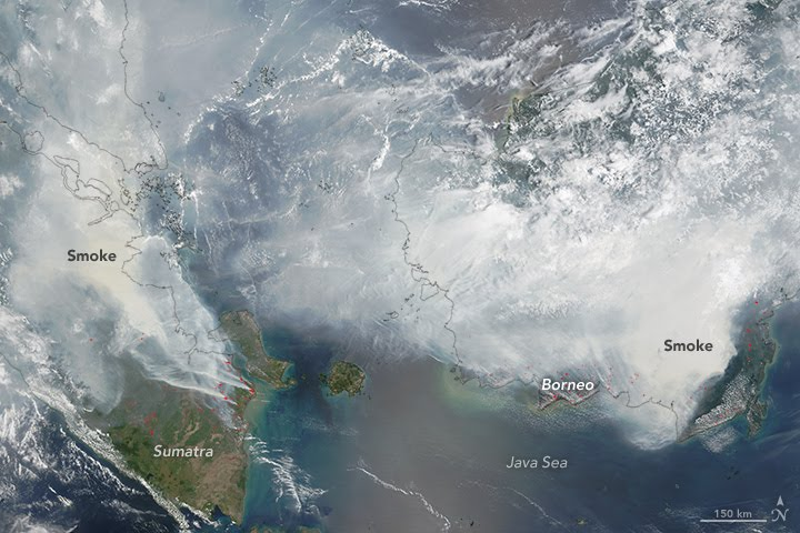 Satellite image of fires in Indonesia.