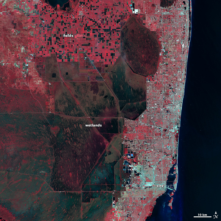 Landsat image of the Everglades in near infrared, red, and green light.