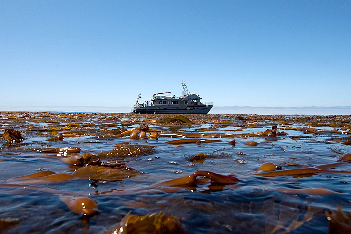 Floating kelp canopies