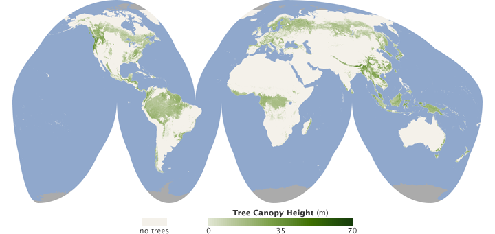 Global map of tree canopy height.