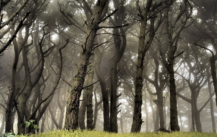 Photograph of a misty forest.