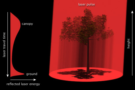 Schematic of LIDAR measurements of tree height.