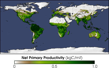Map of Net Primary Productivity, December 1999