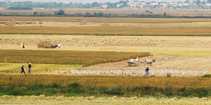 Photograph of rice paddies in the Poyang Lake area, Jiangxi Province, China.