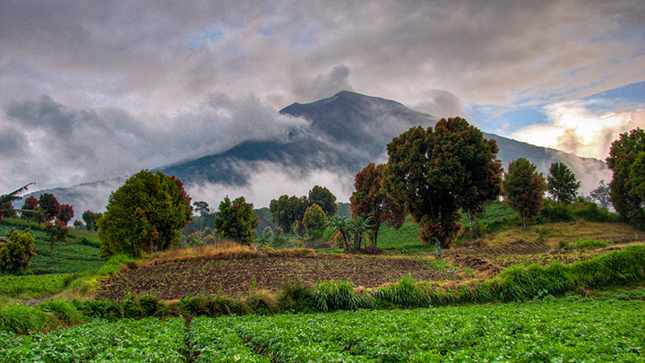 Cropland around Mount Kerinci