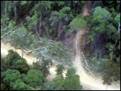 Photograph of a Road Through the Rainforest