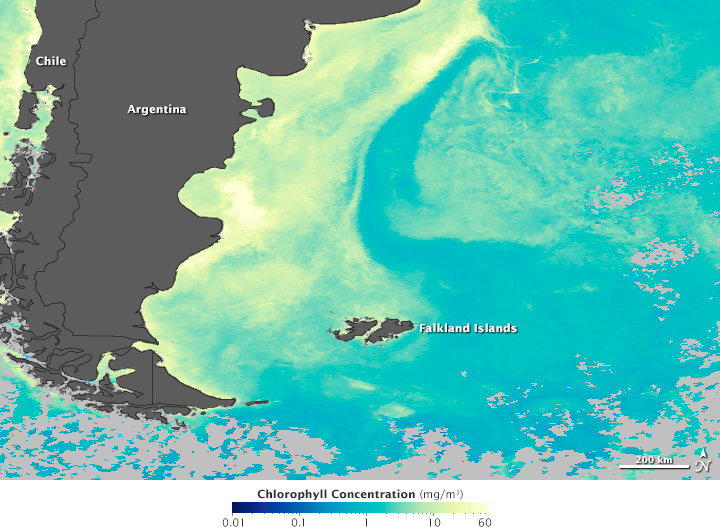 Satellite map of Malvinas March 2012 chlorophyll concnetration.
