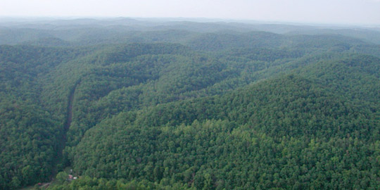 Photograph of forested area north of the Hobet mine in West Virginia