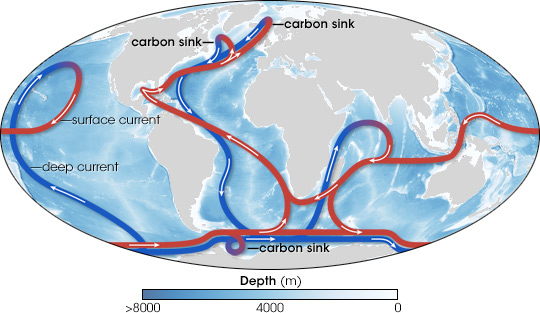 Map of deep ocean circulation, including carbon sinks.