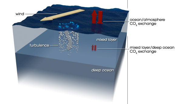Diagram of carbon dioxide exchange in the ocean's mixed layer.