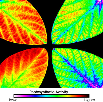 Image of Plant Photosynthetic Efficiency