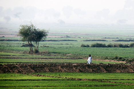Essay Vs Paper In Areas Where The Floods Receded Pakistanis Were Quick To Plant Crops  These Rice Fields In Sindh Province Were Almost Ready For Harvest On  December   Computer Science Essay also How To Write A Essay For High School Heavy Rains And Dry Lands Dont Mix Reflections On The   How To Write A Business Essay