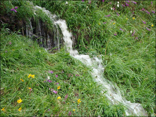 A photograph of wildfowers surrounding a rivulet in northern Siberia.