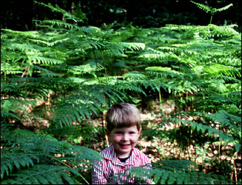 boy in ferns