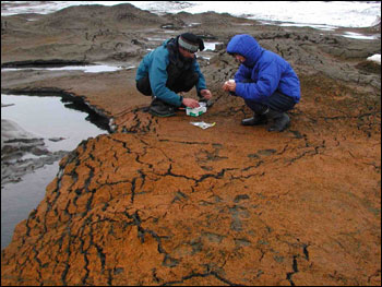 Scientists studing a cold-adapted ecosystem