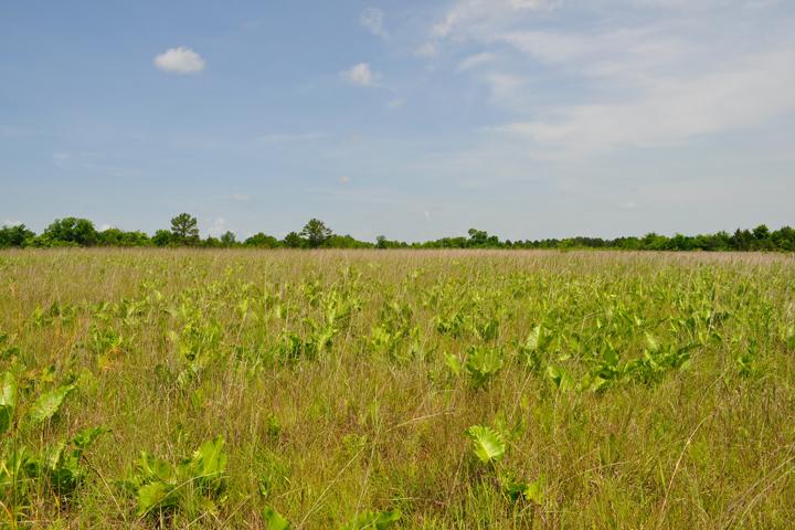 Mississippi's Pulliam Prairie