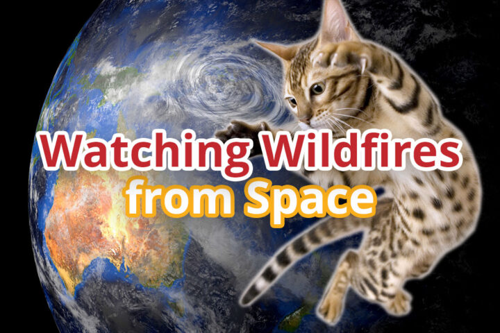 A wild cat over Australia where wild cats forage in burn scars.