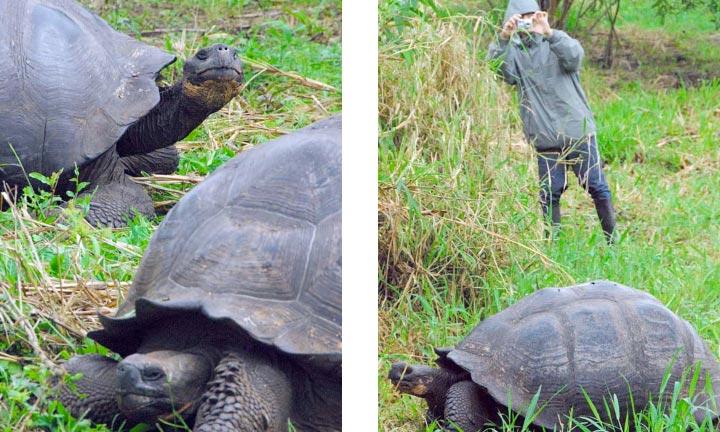 More tortoises