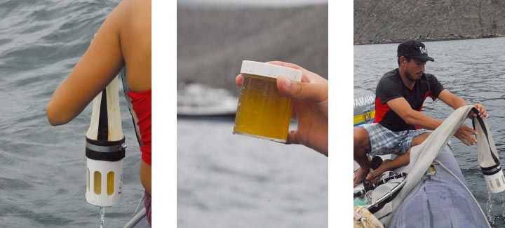 Chlorophyll-a rich phytoplankton filled jars.