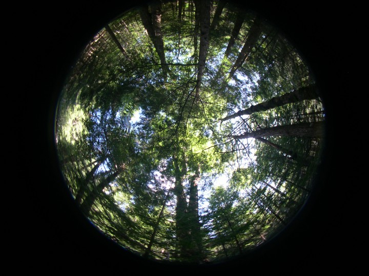 A hemispherical photograph taken through a fisheye type lens.  These photos will be digitized and analyzed to calculate canopy cover of the forest.      Photo by Sassan Saatchi.