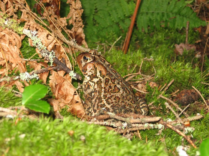 Hurricane Bill brought some wet weather to Maine over the weekend, bringing out moisture-loving fauna like this toad.