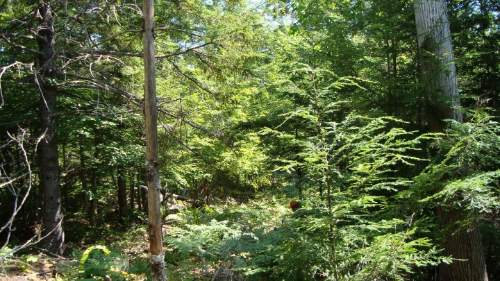 The North Woods: Penobscot Experimental Forest.  This is a managed forest, not wilderness, yet it is still is quite beautiful and alluring.