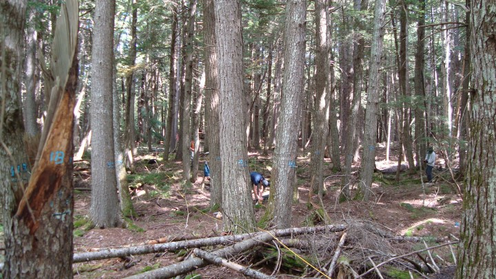 An old growth, high biomass site in Penobscot Experimental Forest.  Note the dead wood on the ground.  Such dead wood is part of the above ground biomass of the forest, but is not currently measured by remote sensing instruments.   Photo by Jon Ranson.