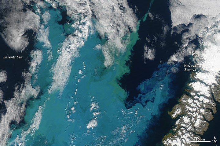 Barents Sea  phytoplankton Bloom