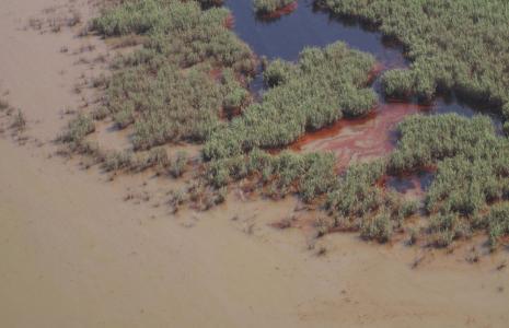 Oil in the marshes of the Mississippi Delta  http://ocean.si.edu/gulf-oil-spill