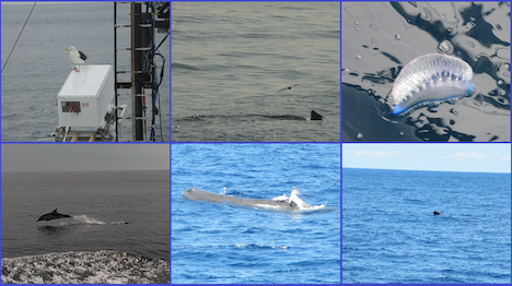 Wildlife in action. Courtesy of crew members, Courtney Kearney and Ivona Cetinic