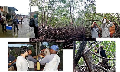 Mangroves Figure 2