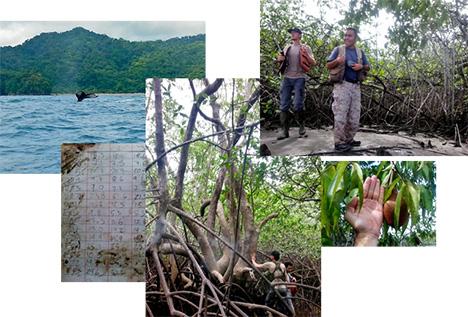 Mangroves Figure 3