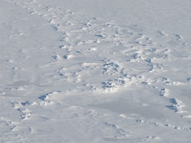 solid sea ice