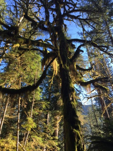 Quinault Rainforest (Photo credit: Angela Rowe)